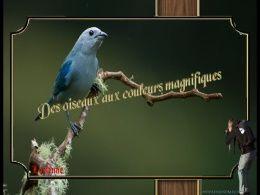 diaporama pps Oiseaux aux couleurs magnifiques