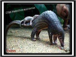 diaporama pps Être parents en milieu sauvage