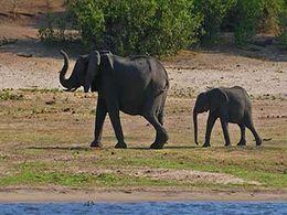 diaporama pps Faune d'Afrique – Éléphant