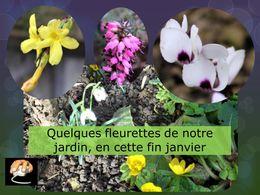 diaporama pps Fleurettes de janvier
