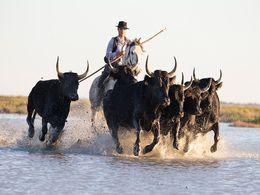 diaporama pps Gardiane de taureau