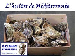 diaporama pps L'huître de méditerranée