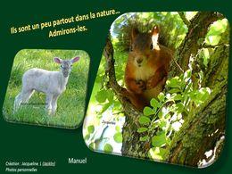 diaporama pps Un peu partout dans la nature