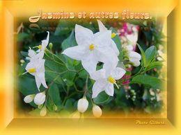 diaporama pps Jasmins et autres fleurs