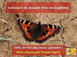 diaporama pps La beauté des papillons