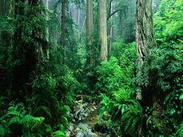 diaporama pps La forêt