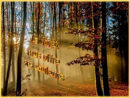 diaporama pps La forêt nous offre ses couleurs