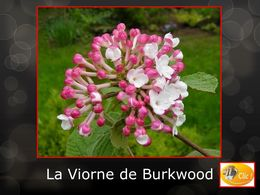 diaporama pps La Viorne de Burkwood