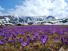 diaporama pps Le printemps est le peintre de la terre