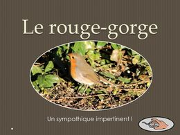 diaporama pps Le rouge-gorge