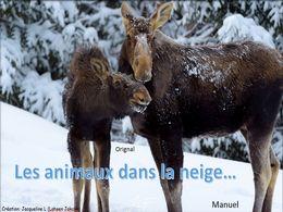 diaporama pps Les animaux dans la neige