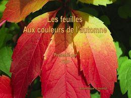 diaporama pps Feuilles aux couleurs de l'automne