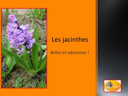 diaporama pps Les jacinthes
