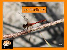 diaporama pps Les libellules