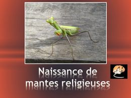 diaporama pps Les mantes religieuses