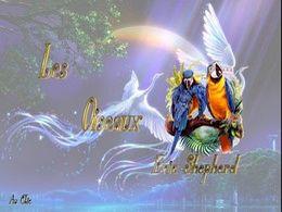 diaporama pps Les oiseaux – Eric Shepherd