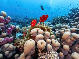 diaporama pps Les plus beaux récifs coralliens