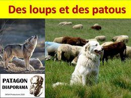 diaporama pps Loups et patous