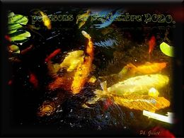 diaporama pps Mes poissons en Septembre 2020