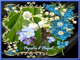 diaporama pps Myosotis et muguet