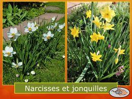 diaporama pps Narcisses et jonquilles