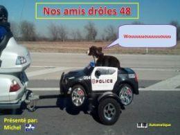 diaporama pps Nos amis drôles 48