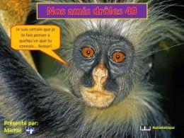 diaporama pps Nos amis drôles 49