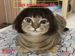 diaporama pps Nos amis drôles 50