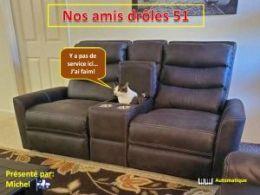 diaporama pps Nos amis drôles 51