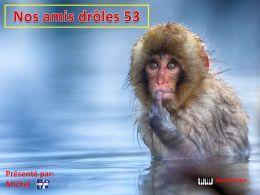 diaporama pps Nos amis drôles 53