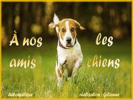 diaporama pps Nos amis les chiens