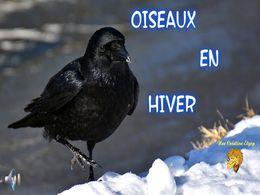 diaporama pps Oiseaux en hiver