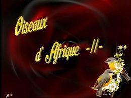 diaporama pps Oiseaux d'Afrique II