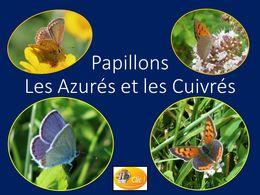 diaporama pps Papillons azures et cuivres