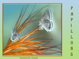 diaporama pps Papillons