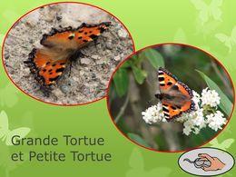 diaporama pps Petite tortue grande tortue