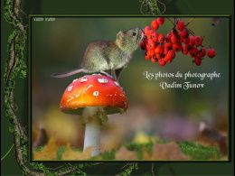 diaporama pps Photos du photographe Vadim Tunov