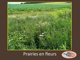 diaporama pps Prairies fleuries