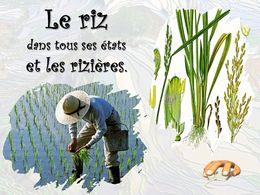 diaporama pps Riz et rizières