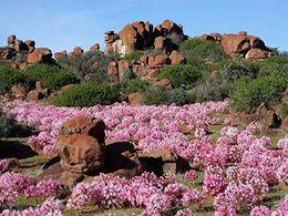diaporama pps Royaume floral d'Afrique du Sud