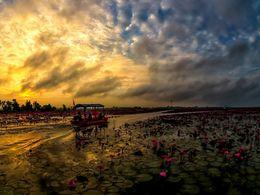 diaporama pps Talay bua daeng – Thailand