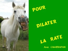 Pour dilater la rate