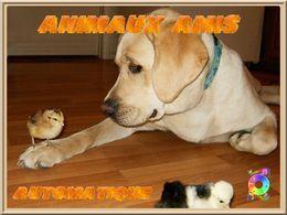 Animaux amis