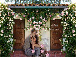 As rosas não falam