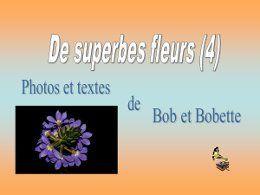 Diaporama De superbes fleurs 4