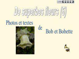 De superbes fleurs 6