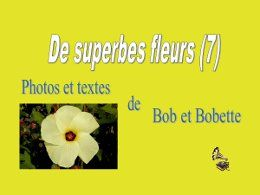 De superbes fleurs 7