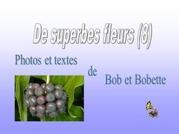 De superbes fleurs 8