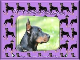 Der traurige Dobermann