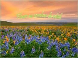 Fleurs au coucher de soleil